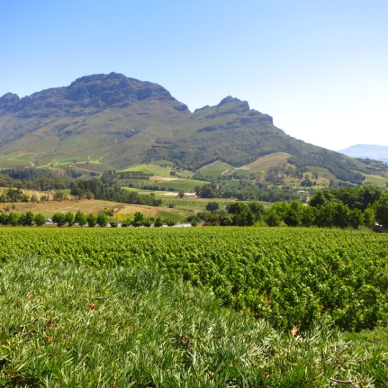 Sticking up just above the spa terrace, Botmaskop is a sharp peak that has inspired one of the estate's vintages: A red blend, the Delaire Botmaskop 2012 was made from 55% Cabernet Sauvignon, and various amounts of Cabernet Franc, Merlot, Petit Verdot, Shiraz, and Malbec.