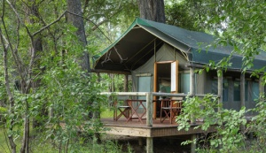 Tented-accommodation-in-the-forest
