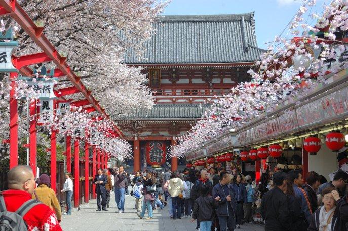 tokyo_cherry_blossom_1_by_nikonforever-d3eg7uw