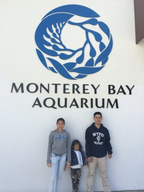 A must when you're in Monterey! The best way to see the sprawling marine life evident around the area.