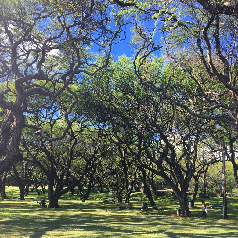 These ancient trees are a welcoming sight as you enter the park.